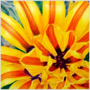 Gazania Orange by Helen Lock