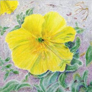 Beach Primrose by Helen Lock