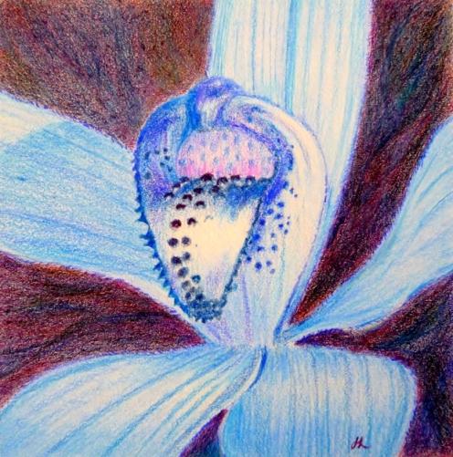Silky Blue Orchid by Helen Lock