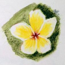 Frangipani Flower Sketch 1, Lovina, Bali