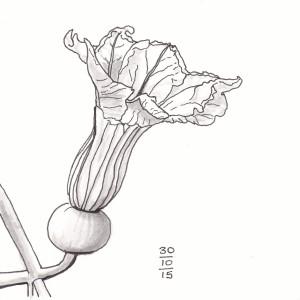 Pumpkin Flower - #Inktober 30
