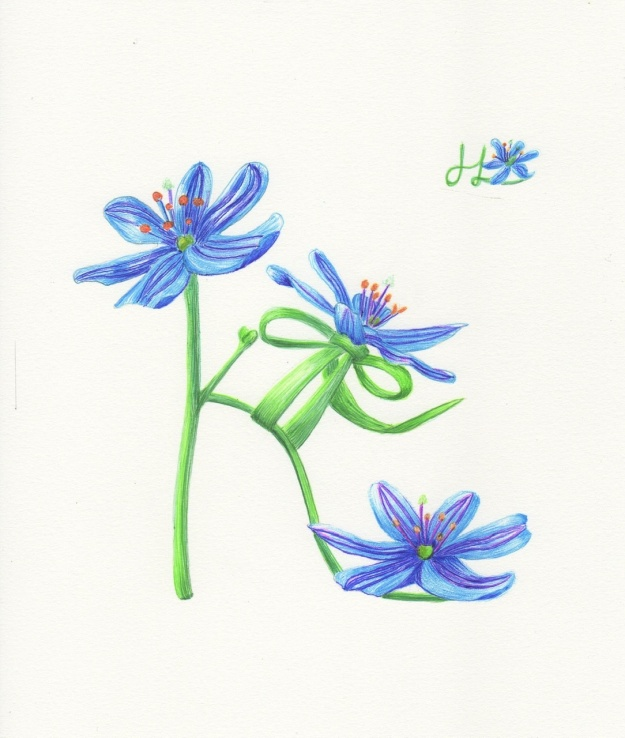 Blue Stars Shoe - Wildflower Shoe Series 2
